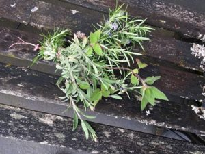 Dishing with Kathy Casey Garden Herbs - Dishing with Kathy Casey